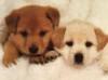 Kennel club: Merry Meet Kennels
