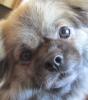 DogGirl10 - Dogzer dog breeder