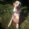 alpha_6057 - Dogzer dog breeder