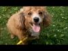 ilovepeanutbutter87 - Dogzer dog breeder