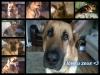 swiftiegirl13 - Dogzer dog breeder