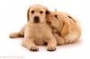 Sassyrider01 - Dogzer dog breeder