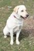 concordia21 - Dogzer dog breeder