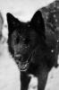 Frost1232 - Dogzer dog breeder