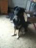 Dog_Lover926 - Dogzer dog breeder
