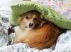 Alexandoria - Dogzer dog breeder