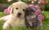 Dogomego - Dogzer dog breeder