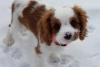 iceprincess000 - Dogzer dog breeder