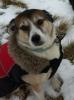 TripTucker - Dogzer dog breeder