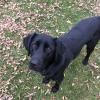 AgilityFanatic - Dogzer dog breeder