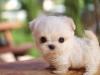 cute12kittie - Dogzer dog breeder