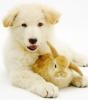 Hoplock - Dogzer dog breeder