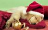 tabbycat5 - Dogzer dog breeder