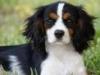 JPChin4L - Dogzer dog breeder
