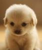 pollyjolly25th - Dogzer dog breeder