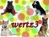 wertz3 - Dogzer dog breeder