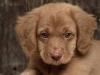 HuskyGermans - Dogzer dog breeder