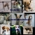 A Dog\'s Heaven Kennel Sanctuary
