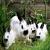 Brave Bunnies (Bunny RP)