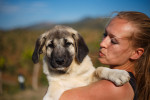 Spanish Mastiff picture