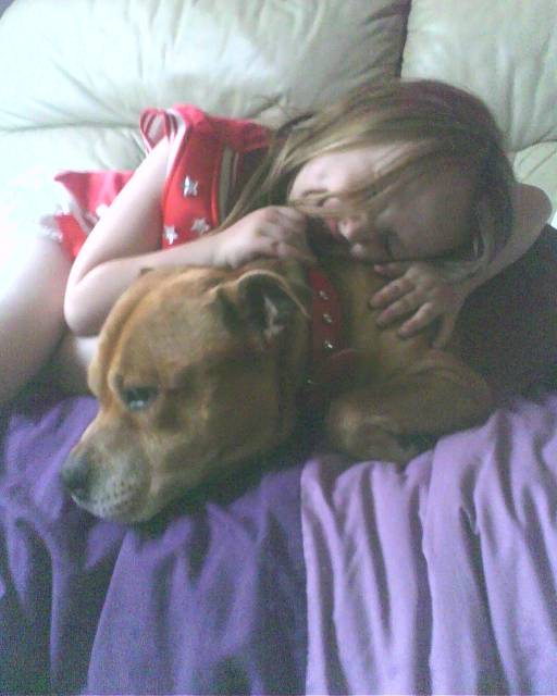 Sandy - Male Staffordshire bull terrier (12 years)