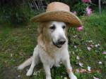 Dog notre bon charlie - Golden Retriever  (0 months)