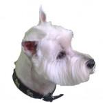BIANCA - West Highland White Terrier (10 years)