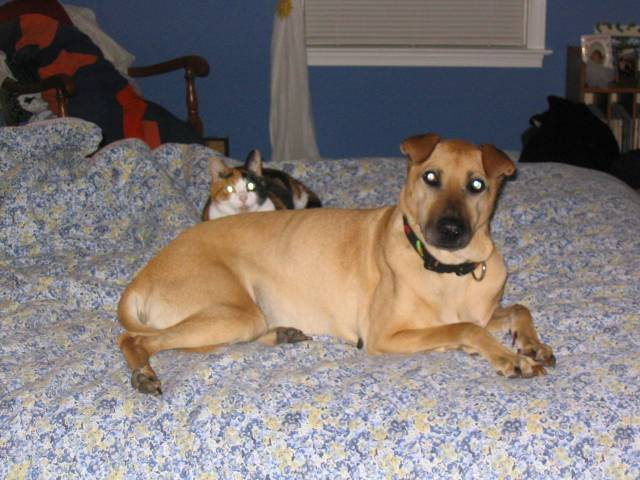 Dog and Cat Friends - Male Shar pei (14 years)