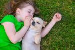 Un Chihuahua et une petite fille