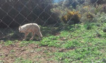 Escarcha - Wolf (7 years)