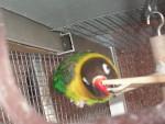Dayla - Bird (2 years)
