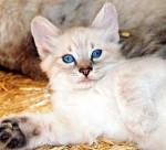 Tex - Male Cat