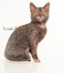 Penelope de La Vallée Des Dieux - Cat (4 months)