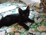 Hunter - (3 months)
