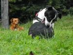 Lylou (Jack Russel) et Eden (X épagneul) - (8 years)
