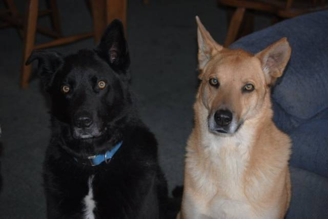 Bear and Chance - Male (10 years)