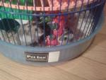 Mikka e Dafne - Hamster (3 months)