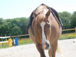 ginger - Horse (6 years)