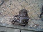 14. Vor den Affen hatte ich große Angst. Nur vor diesem kleinen Pavian nicht. - Monkey