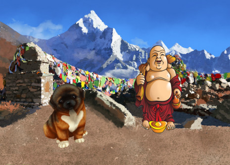 Adopt a dog that comes straight from the Himalayas: the Tibetan Spaniel!